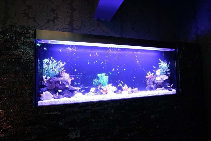 東京都 ファルファーラ様  160cm淡水魚水槽  設置事例 メイン画像