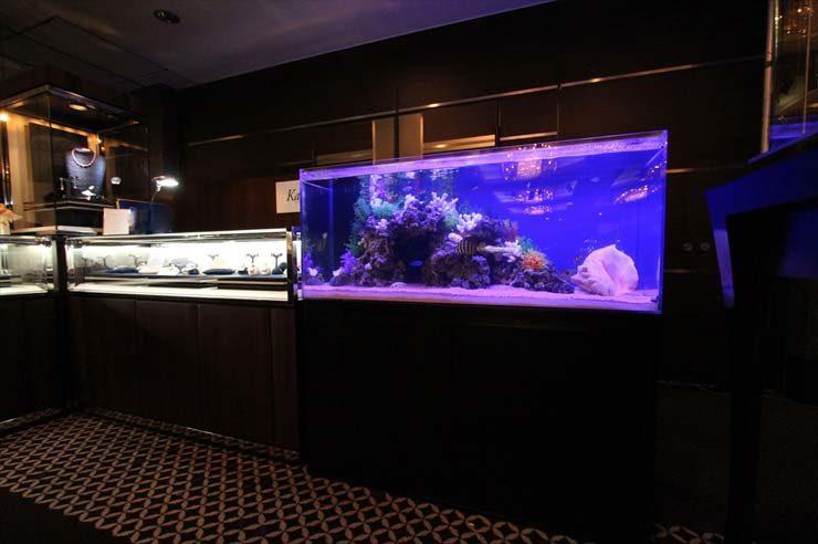 都内 ジュエリーイベント 120cm海水魚水槽 設置事例 メイン画像
