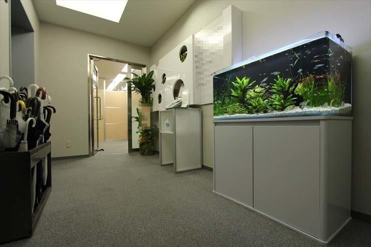 赤坂 オフィスのエントランスに設置 幻想的な水草レイアウト メイン画像