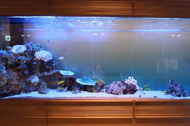 千葉県木更津市 結婚式場様 300cm海水魚水槽 設置事例 水槽画像3