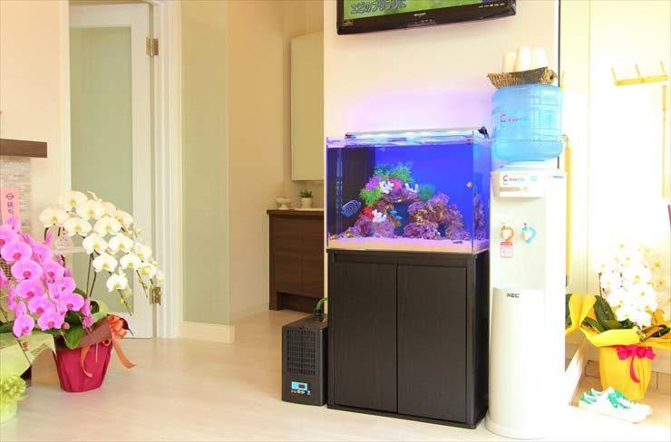 神奈川県横浜市 歯科医院様に設置  アクアリウム(60cm海水魚水槽)の事例 メイン画像