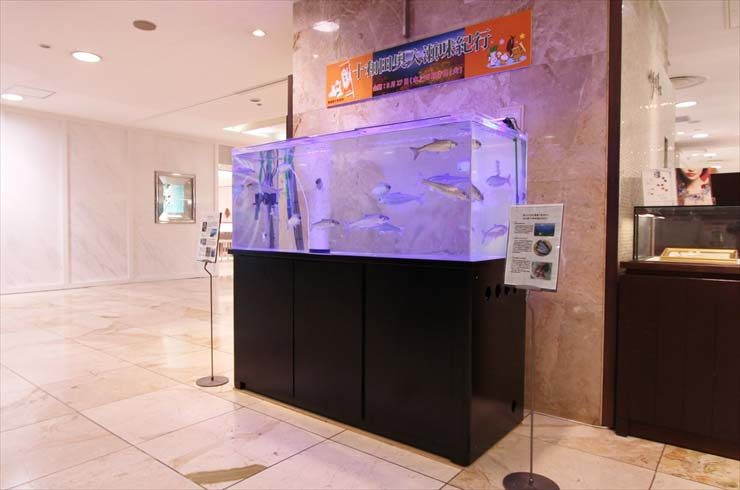 千葉県柏市 高島屋 イベント 150cmヒメマス水槽  設置事例 メイン画像