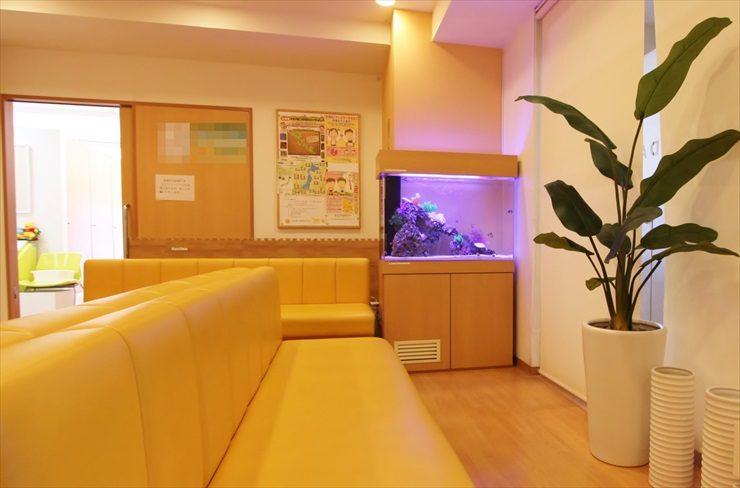 板橋区 耳鼻咽喉科クリニック 90cm海水魚水槽 設置事例 メイン画像