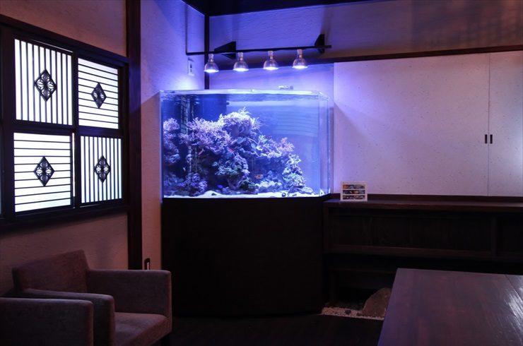 神奈川県 川崎市 料亭 特殊海水魚水槽 設置事例 水槽画像2