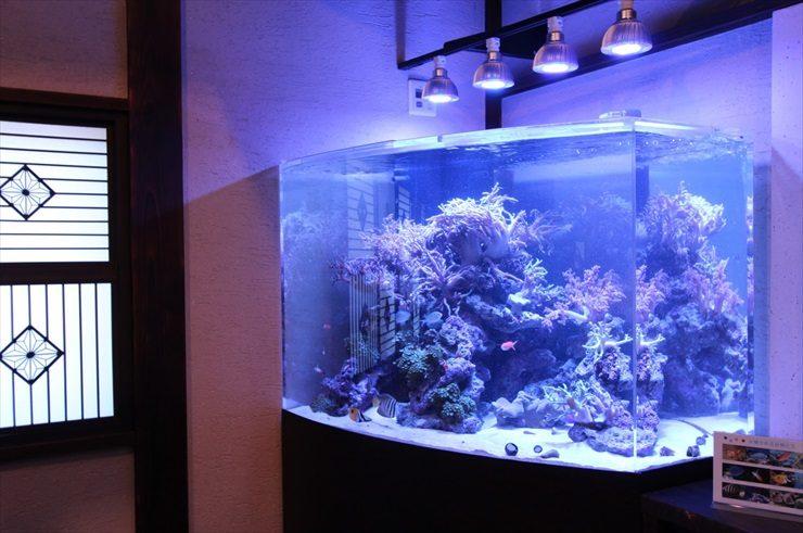 神奈川県 川崎市 料亭 特殊海水魚水槽 設置事例 水槽画像3