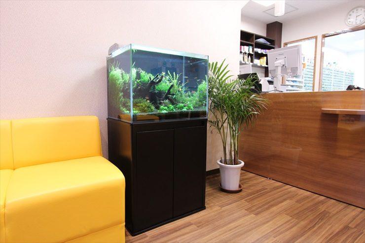 町田市 薬局の待合室 60cm淡水魚水槽 設置事例 メイン画像