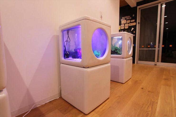 東京都調布市 保育園に設置 3台の淡水魚水槽事例 水槽画像2