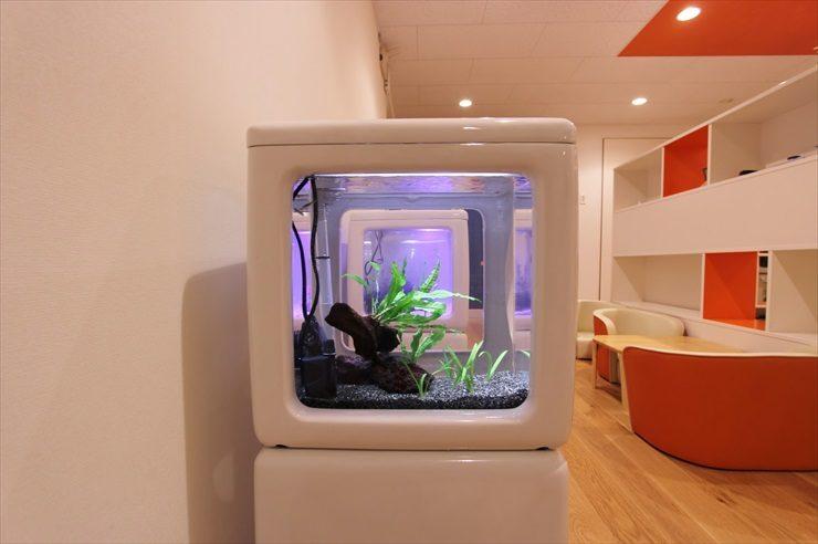 東京都調布市 保育園に設置 3台の淡水魚水槽事例 水槽画像3