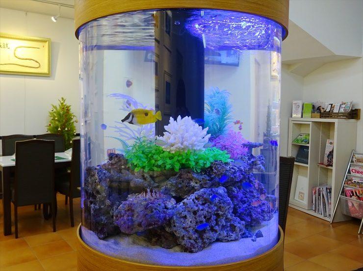 オフィスの待合室 海水円柱水槽 設置事例 水槽画像3