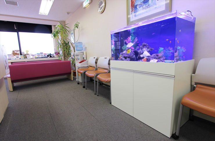 渋谷区 クリニック 90cm海水魚水槽レンタル事例 メイン画像