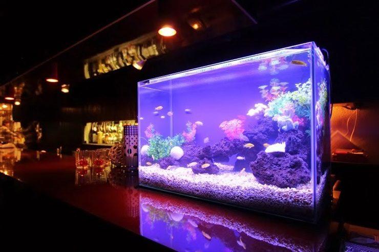 世田谷区 飲食店 60cm淡水魚水槽 設置事例 メイン画像