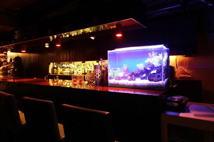 世田谷区 飲食店 60cm淡水魚水槽 設置事例 水槽画像2
