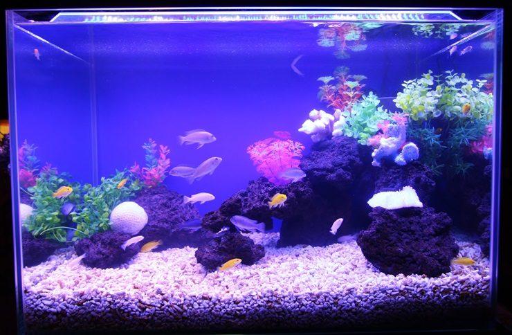 世田谷区 飲食店 60cm淡水魚水槽 設置事例 水槽画像3
