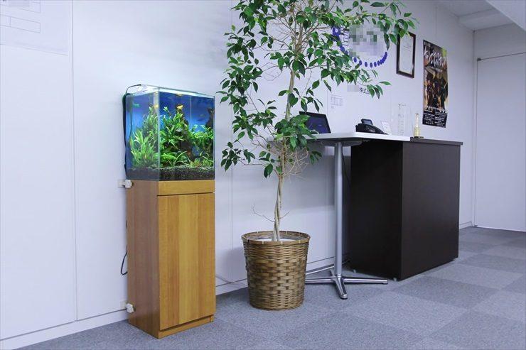 千代田区 オフィス 30cm淡水魚水槽 設置事例 メイン画像