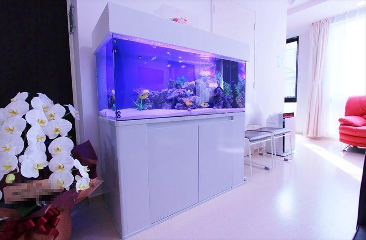 練馬区 皮膚科小児科クリニック 120cm海水魚水槽 設置事例 メイン画像