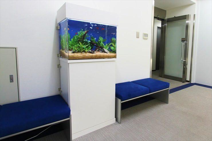 港区 オフィスのエントランス 60cm淡水魚水槽 設置事例 メイン画像