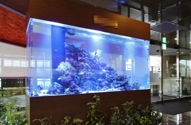 神奈川県藤沢市 オフィス ロビーに設置 海水アクアリウム 水槽販売事例 メイン画像