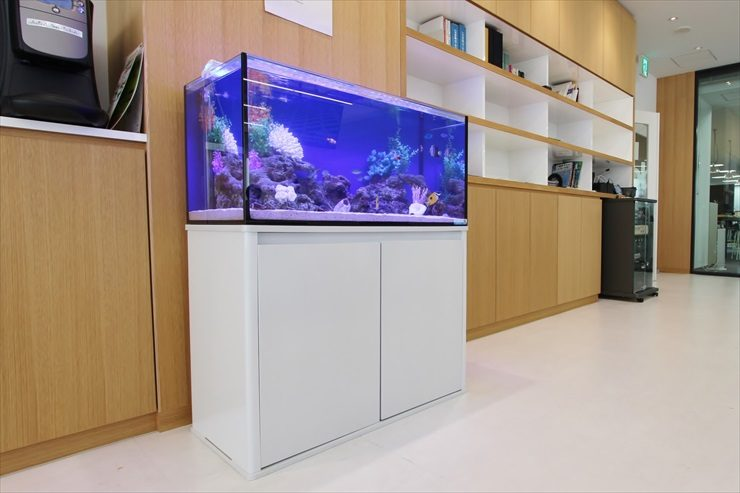 中央区銀座 不動産会社 90cm海水魚水槽 設置事例 メイン画像