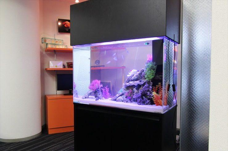 千葉県 千葉市 オフィスの入口に設置 90cm海水魚レンタル事例 メイン画像