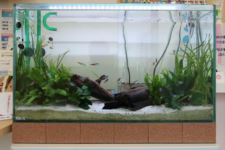 神奈川県横浜市 歯科クリニック様  60cm淡水魚水槽  設置事例 メイン画像