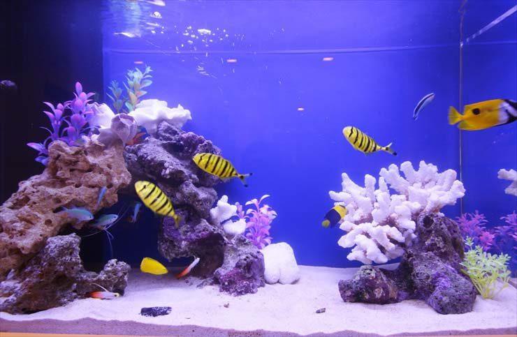 世田谷区 小児科様  80cm海水魚水槽  設置事例 メイン画像