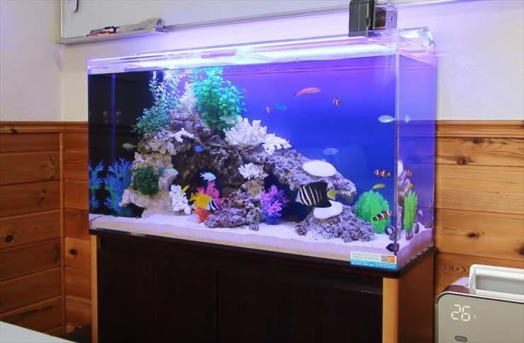 オフィスの打ち合わせルームに設置  90cm海水魚水槽の事例  メイン画像
