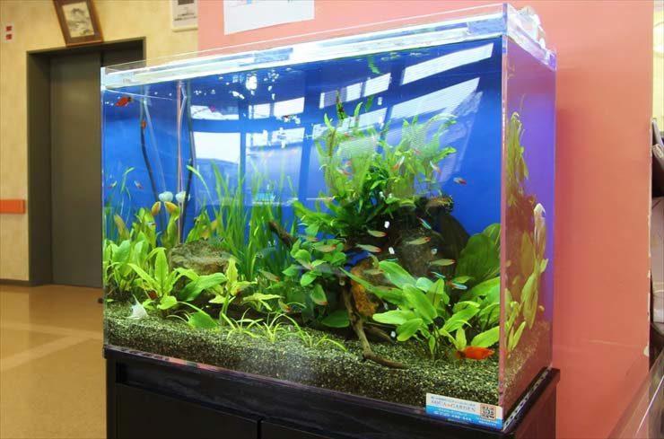 あきる野市 外科様  60cm淡水魚水槽  設置事例 メイン画像