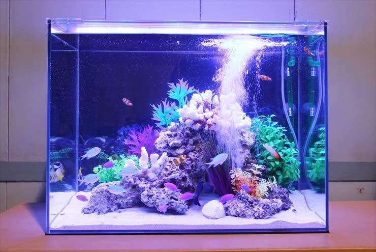 撮影短期イベント  60cm海水魚水槽  設置事例 メイン画像