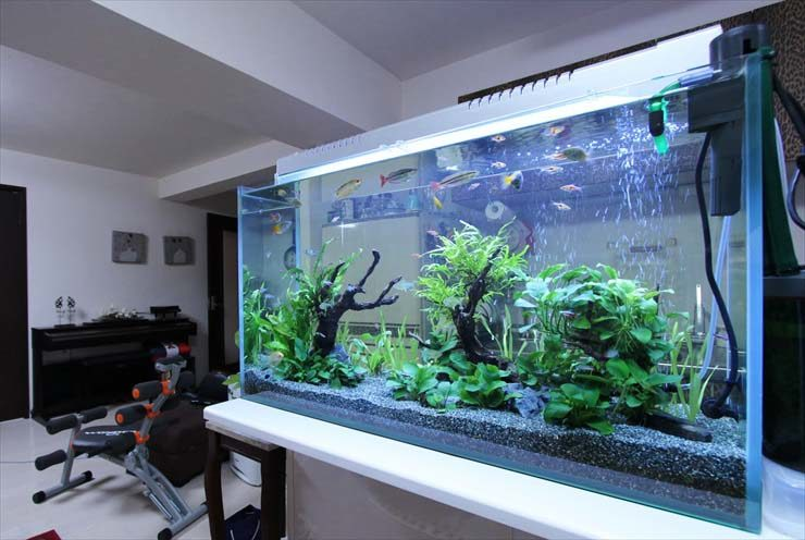新宿区 企業様  90cm淡水魚水槽  設置事例 メイン画像