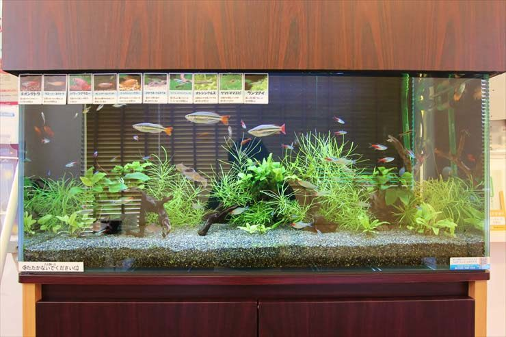 千葉県千葉市 薬局様  90cm淡水魚水槽  設置事例 メイン画像