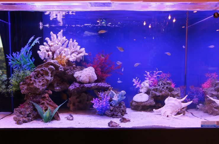 田園調布  クリニック様  90cm海水魚水槽  設置事例 メイン画像