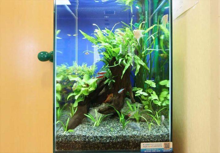 東京都清瀬市 小児科クリニック様  30cm淡水魚水槽  設置事例 メイン画像