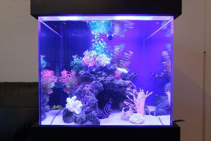 六本木  個人宅様  45cm海水魚水槽  設置事例 メイン画像