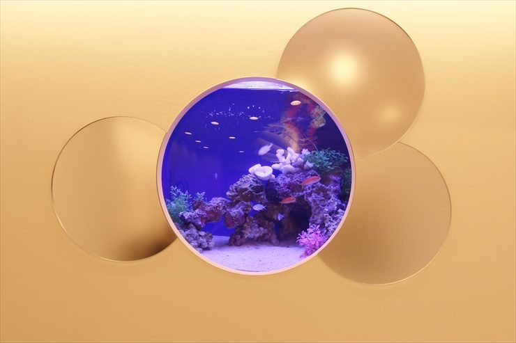 横浜市 サロン様 60cm海水魚水槽  設置事例 メイン画像