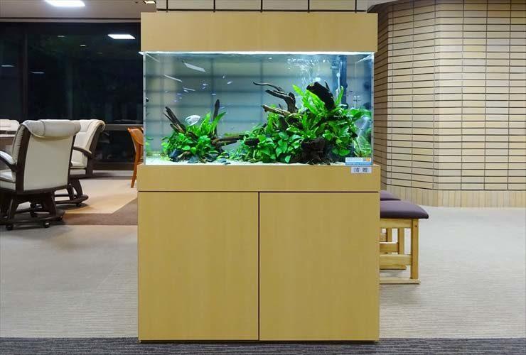 愛知県名古屋市 老人ホーム様  90cm淡水魚水槽  設置事例 水槽画像3