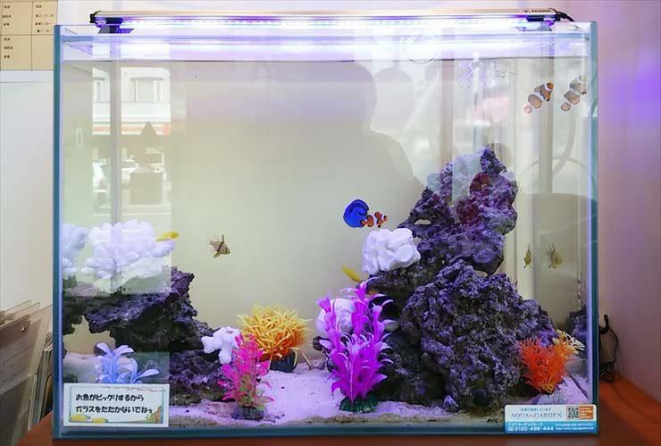 北海道札幌市 歯科医院様  60cm海水魚水槽  設置事例 メイン画像