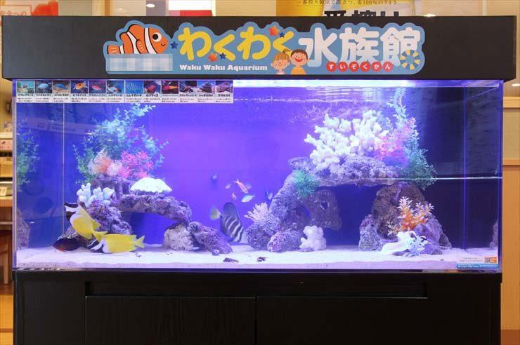 埼玉県所沢市  飲食店様  120cm海水魚水槽  設置事例 メイン画像