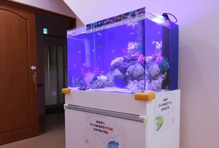あきる野市 内科小児科クリニック様  60cm海水魚水槽  設置事例 メイン画像