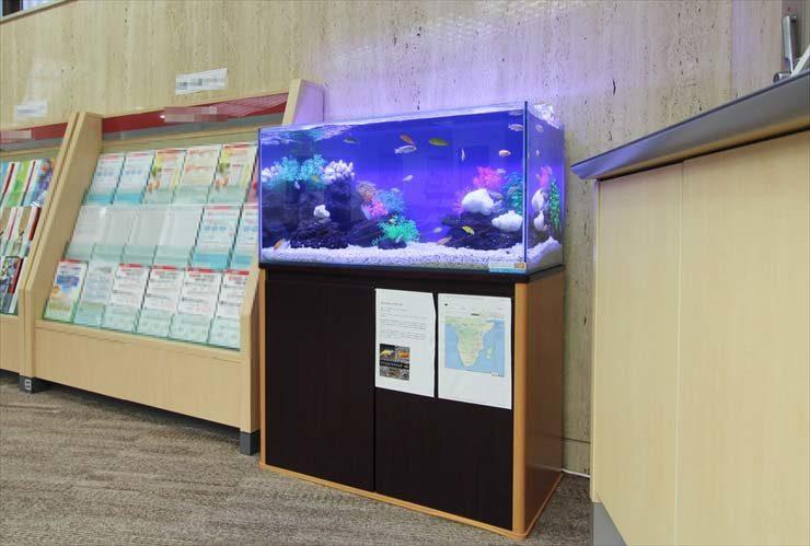 神奈川県横浜市 証券会社様  90cm淡水魚水槽  設置事例 メイン画像