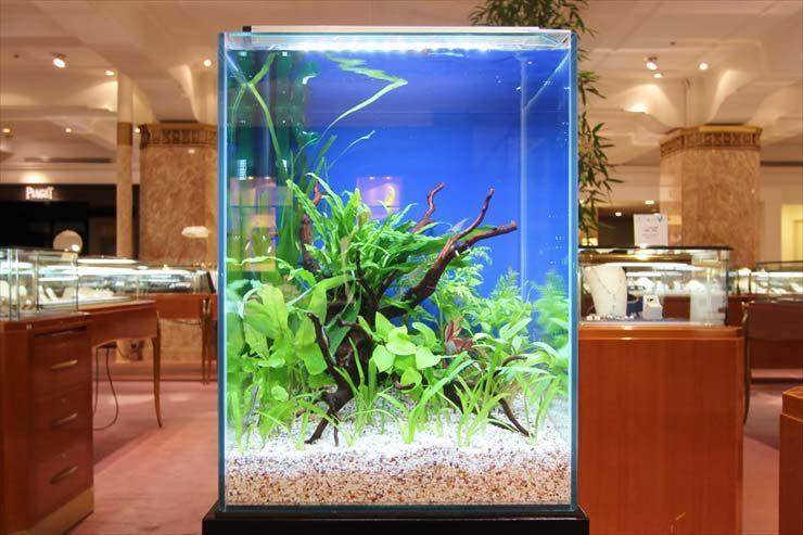 日本橋  短期イベント  30cm淡水魚水槽  設置事例 メイン画像