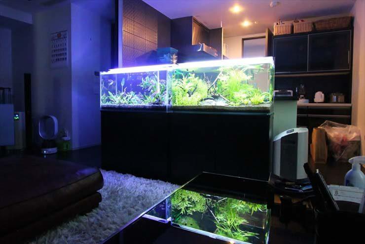 新宿 個人宅様  90cm淡水魚水槽  フルリニューアル事例 メイン画像