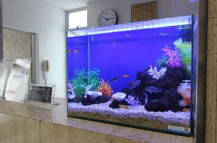 新宿 企業様  60cm淡水魚水槽  設置事例 メイン画像