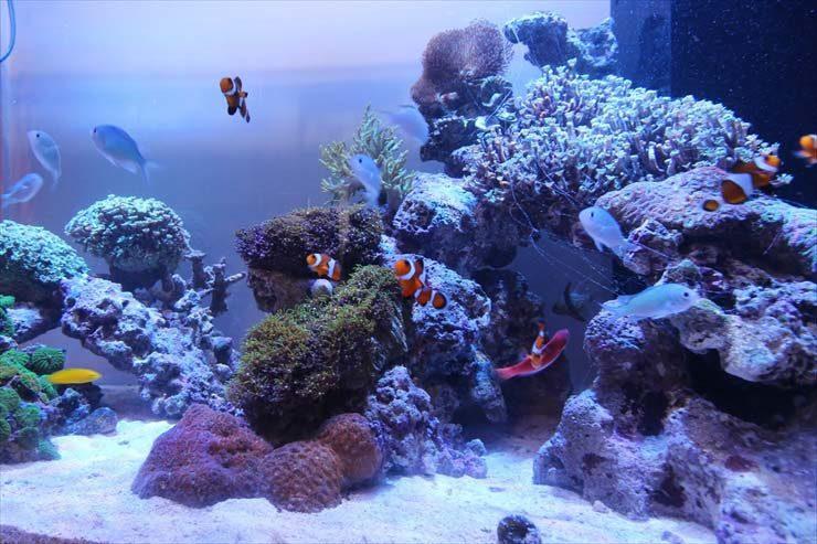新宿 個人宅様  90cm海水魚水槽  設置事例 メイン画像