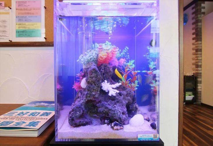 千葉県柏市 リラクゼーションサロン様  30cm海水魚水槽  設置事例 メイン画像