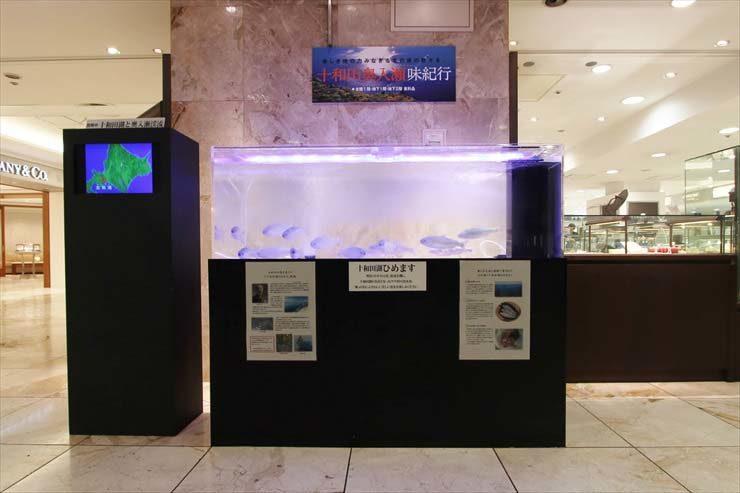 高島屋 柏店 期間限定イベント  150cm淡水魚水槽  設置事例 メイン画像
