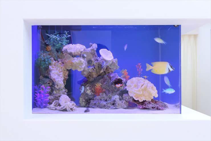 サロン様  60cm海水魚水槽  設置事例 メイン画像