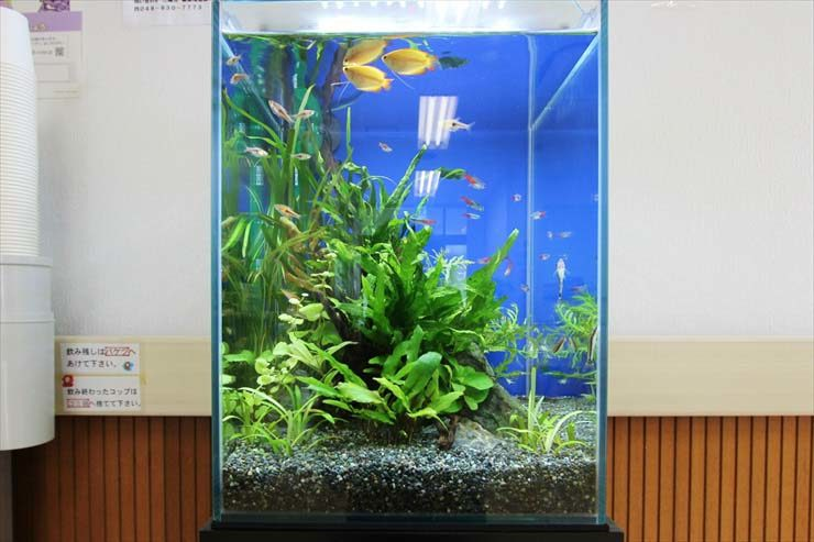 埼玉県三郷市 クリニック様  30cm淡水魚水槽  設置事例 水槽画像1
