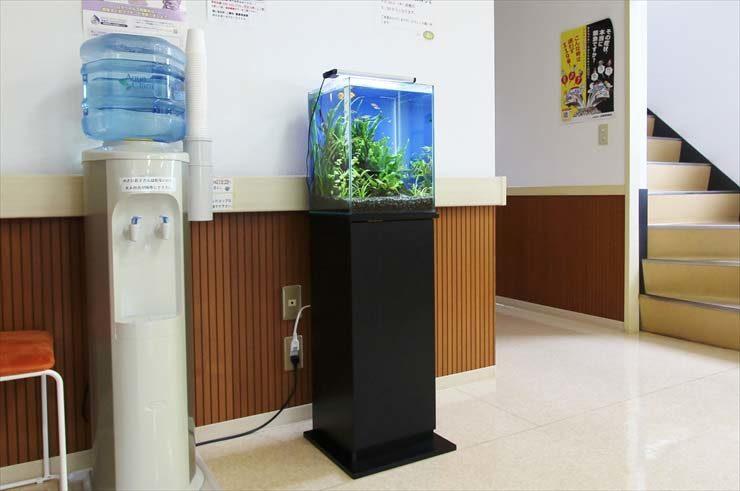 埼玉県三郷市 クリニック様  30cm淡水魚水槽  設置事例 水槽画像2