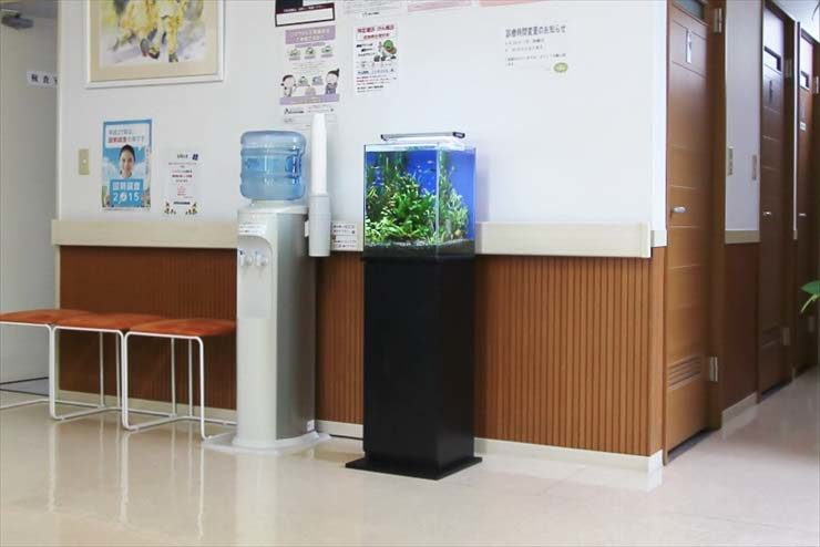 埼玉県三郷市 クリニック様  30cm淡水魚水槽  設置事例 水槽画像3