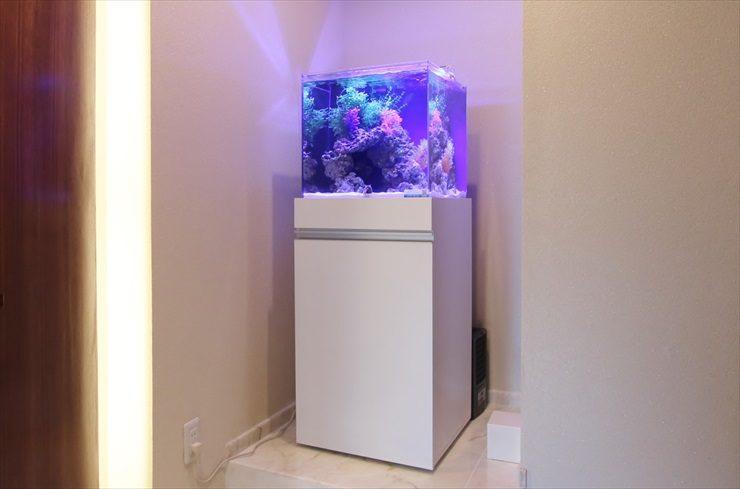 吉祥寺 法律事務所様  45cm海水魚水槽  設置事例 メイン画像